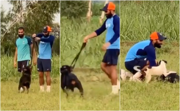 Mohammed Shami Trains with his dog